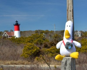 Duck_CapeCodLightHouse