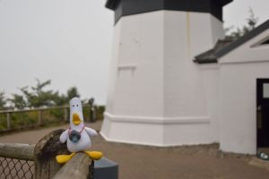 DuckLighthouse